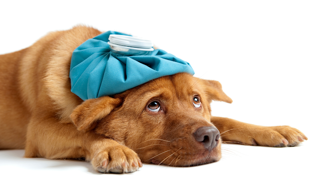 5 Ways to Know if Your Dog is Sick: Signs That Your Dog May Need More Attention