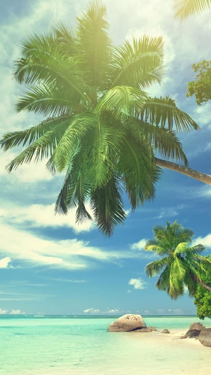 Обои на телефон для девушек пальмы.