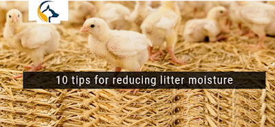 10 Tips to reduce litter moisture in poultry farm