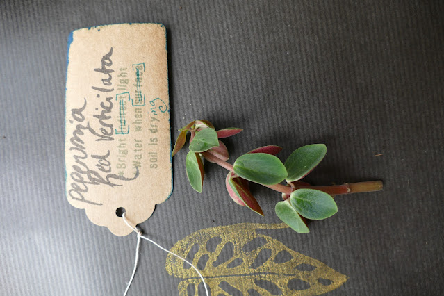 poppet plants review, houseplant gifts uk, plant lover gifts uk, best gift for plant lovers, mystery cuttings uk plants, plant cuttings mystery box