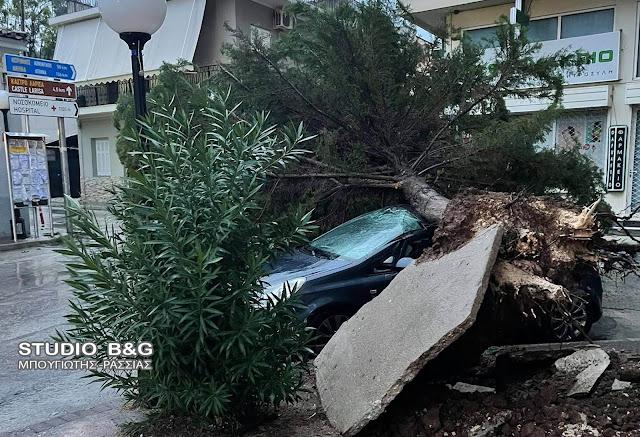 Περιφέρεια Πελοποννήσου: Κλήσεις για κοπές 72 δέντρων δέχθηκε η Πυροσβεστική