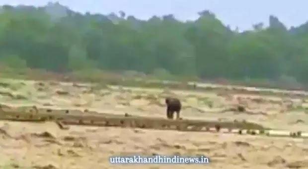 उत्तराखंड: नदी में बाढ़ में फंसा हाथी बचाया गया, वीडियो वायरल
