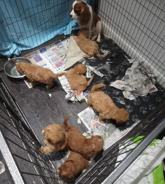 Dog Sitter and Breeder Who Neglected At least 117 Puppies Is Banned From Keeping Animals