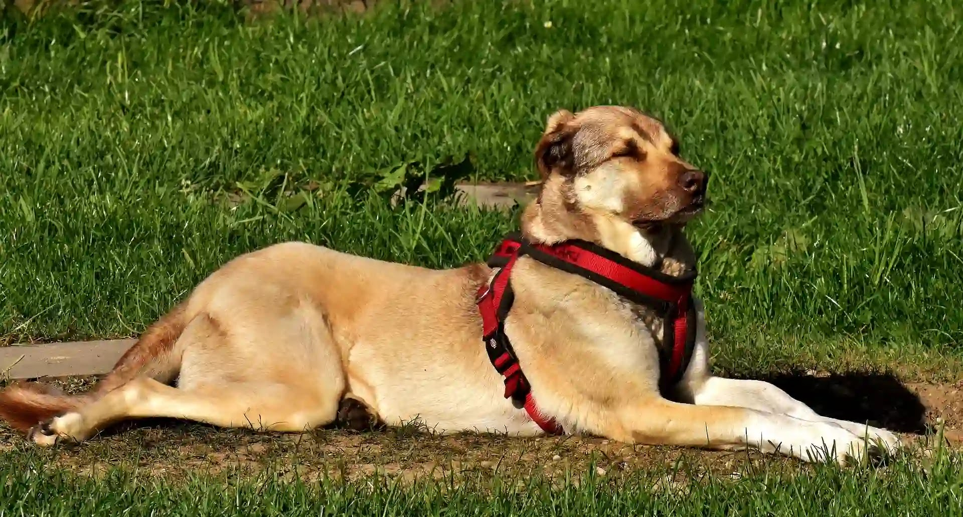 What are the best dog obedience training methods?