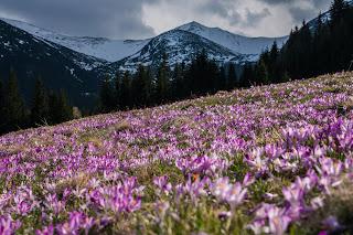 Alpine Flowers - Photo by Dawid Zawiła on Unsplash