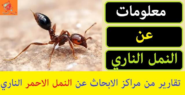 """"""""""",""""النمل الناري"""","""""""","""""""","""""""","""""""","""""""","""""""","""""""" """""""",""""النمل الناري في السعودية"""","""""""","""""""","""""""","""""""","""""""","""""""","""""""" """""""",""""النمل الناري الأسود"""","""""""","""""""","""""""","""""""","""""""","""""""","""""""" """""""",""""النمل الناري يهدد امريكا"""","""""""","""""""","""""""","""""""","""""""","""""""","""""""" """""""",""""النمل الناري في المنام"""","""""""","""""""","""""""","""""""","""""""","""""""","""""""" """""""",""""النمل الناري القاتل"""","""""""","""""""","""""""","""""""","""""""","""""""","""""""" """""""",""""النمل الناري في استراليا"""","""""""","""""""","""""""","""""""","""""""","""""""","""""""" """""""",""""النمل الناري بالصور"""","""""""","""""""","""""""","""""""","""""""","""""""","""""""" """""""",""""قرصة النمل الناري"""","""""""","""""""","""""""","""""""","""""""","""""""","""""""" """""""",""""النمل الناري الاسود"""","""""""","""""""","""""""","""""""","""""""","""""""","""""""" """""""",""""النمل النارى"""","""""""","""""""","""""""","""""""","""""""","""""""","""""""" """""""",""""ما هو النمل الناري"""","""""""","""""""","""""""","""""""","""""""","""""""","""""""" """""""",""""النمل الفضي"""","""""""","""""""","""""""","""""""","""""""","""""""","""""""" """""""",""""النمل الاحمر ضد النمل الاسود"""","""""""","""""""","""""""","""""""","""""""","""""""","""""""" """""""",""""النمل المتوحش"""","""""""","""""""","""""""","""""""","""""""","""""""","""""""" """""""",""""النمل السريع"""","""""""","""""""","""""""","""""""","""""""","""""""","""""""" """""""",""""نمل اسود مجنح"""","""""""","""""""","""""""","""""""","""""""","""""""","""""""" """""""",""""النمل فى المنام لابن سيرين"""","""""""","""""""","""""""","""""""","""""""","""""""","""""""" """""""",""""النمل الضخم في المنام"""","""""""","""""""","""""""","""""""","""""""","""""""","""""""" """""""",""""لدغة النمل الناري"""","""""""","""""""","""""""","""""""","""""""","""""""","""""""" """""""",""""علاج قرصة النمل الناري"""","""""""","""""""","""""""","""""""","""""""","""""""","""""""" """""""",""""لدغة النمل الكبير"""","""""""","""""""","""""""","""""""","""""""","""""""","""""""" """""""",""""لسعة النمل الناري"""","""""""","""""""","""""""","""""""","""""""","""""""","""""""" """""""",""""شكل النمل الاسود الناري"""","""""""","""""""","""""""","""""""","""""""","""""""","""""""" """""""",""""حشرة النمل الاسود الناري"""","""""""","""""""","""""""","""""""","""""""","""""""","""""""" """""""",""""حشرة النمل النارى"""","""""""","""""""","""""""","""""""","""""""","""""""","""""""" """""""",""""النمل المحارب"""","""""""","""""""","""""""","""""""","""""""","""""""","""""""" """""""",""""نمل كبير باجنحة"""","""""""","""""""","""""""","""""""","""""""","""""""","""""""" """""""",""""النمل الجبلي"""","""""""","""""""","""""""","""""""","""""""","""""""","""""""" """""""",""""ما هي النمل الناري"""","""""""","""""""","""""""","""""""","""""""","""""""","""""""" """""""",""""ما هو النمل الاحمر"""","""""""","""""""","""""""","""""""","""""""","""""""","""""""" """""""",""""ما هو النمل الاسود"""","""""""","""""""","""""""","""""""","""""""","""""""","""""""" """""""",""""ما هو النمل"""","""""""","""""""","""""""","""""""","""""""","""""""","""""""" """""""",""""ما هو النمل الابيض"""","""""""","""""""","""""""","""""""","""""""","""""""","""""""" """""""",""""ما هو النمل الطائر"""","""""""","""""""","""""""","""""""","""""""","""""""","""""""""""