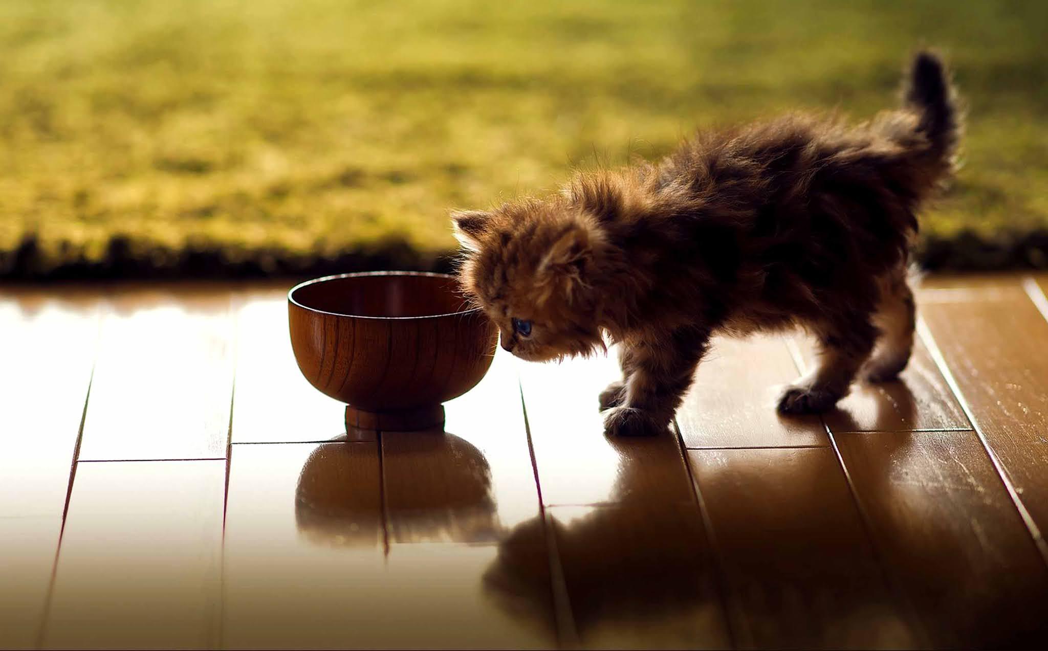 21 wallpaper image kitten, cat, animal, cute wallpaper, background Ultra HD 4K 5K 8K for Computer Desktop