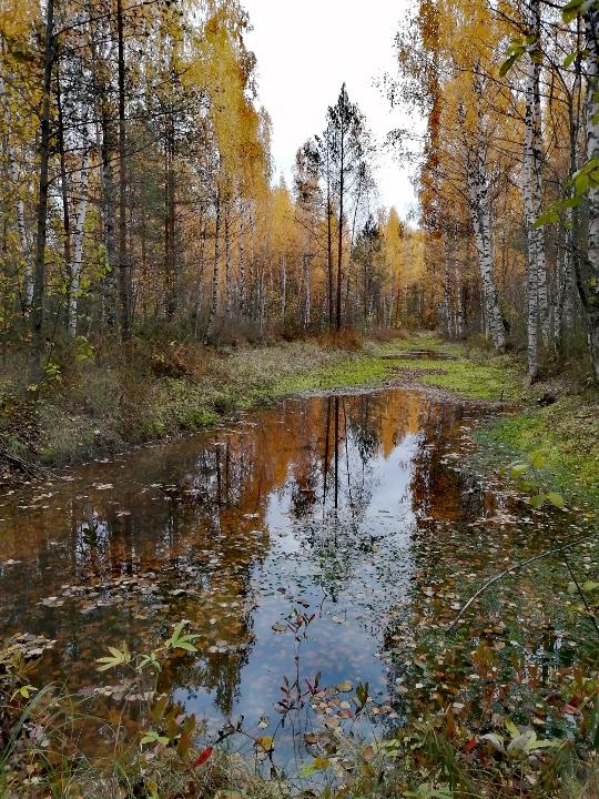 Красота осеннего леса