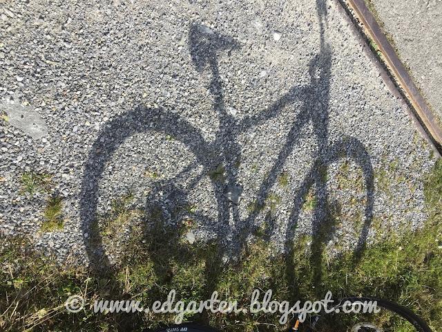 Biken im Saanenland
