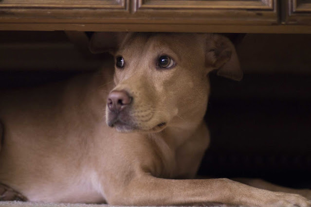 Why Do Dogs Hide Food? The Answer Will Surprise You