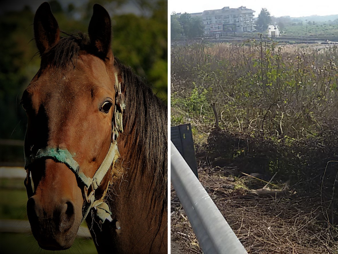 nascondeva un cavallo ad adrano