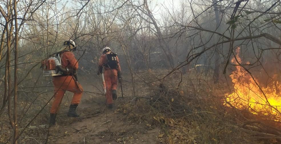 Combate aos incêndios florestais continua em 18 cidades da Bahia neste domingo