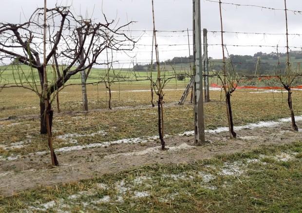 Coldiretti, maltempo: campagne devastate, sale il conto dei danni