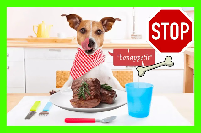 Risks And Benefits of Dogs Natural Diet 2021