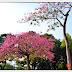 2021健康公園美人樹
