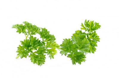 parsley vs basil