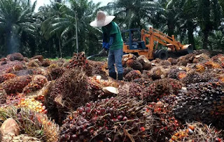 Palm Oil Mission: Modi government approved, 11 thousand crore rupees will be spent