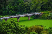 Poluição causa fenômeno 'tapete verde' que cobre rio em Santa Catarina