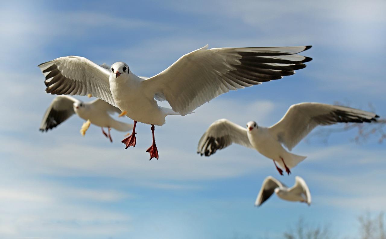 Biologia: O que é Anilhamento de Aves