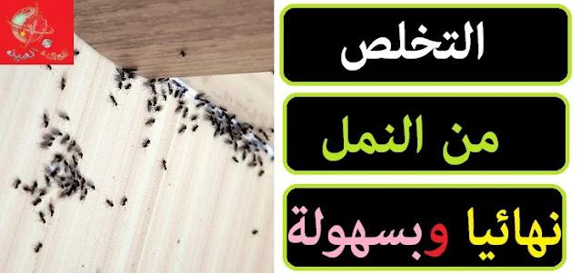 """""""التخلص من النمل للأبد"""" """"التخلص من النمل بسرعة"""" """"طريقة التخلص من النمل"""" """"طرق التخلص من النمل"""" """"التخلص من النمل بدون مبيدات"""" """"التخلص من النمل طبيعي"""" """"التخلص من النمل بالخل"""" """"التخلص من النمل بالملح"""" """"كيف يتم التخلص من النمل"""" """"التخلص من النمل في المطبخ"""""""