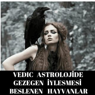 Kuşlarını ve Hayvanları Beslemenin Astrolojik Önemini