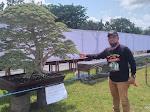 Wow, Bonsai Ini Ditukar Dengan Mobil Pajero Ditambah Uang, Pemiliknya Belum Mau