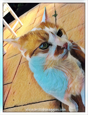 cat art, cute cat, ginger and white cat, cat blog