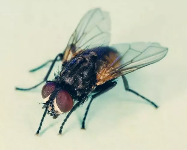 मक्खी से कौन सा बीमारी होती हैं जानेंगे तो आप चौक जाएंगे