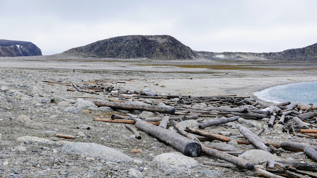 Ancient driftwood tracks 500 years of Arctic warming and sea ice