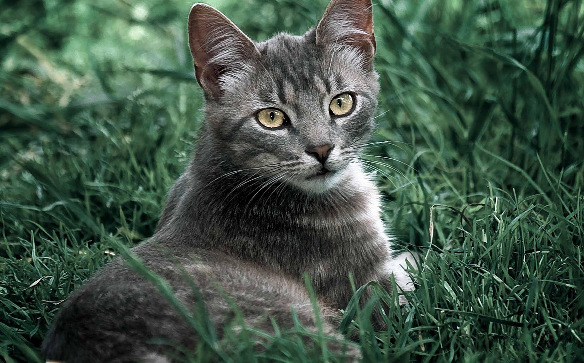 21 wallpaper image kitten, cat, cute, little wallpaper, background Ultra HD 4K 5K 8K for Computer Desktop