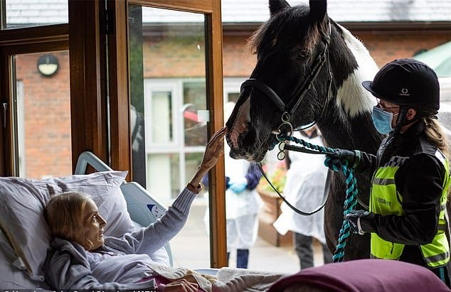 Horse And Dogs Are Brought To Owner's Hospice Deathbed To Say Goodbye