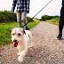 Εκμεταλλευτείτε τη βόλτα με τον σκύλο σας & χτίστε κορμί με αυτές τις 4 ασκήσεις
