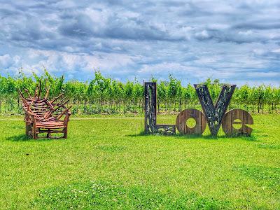 aquileia vigne