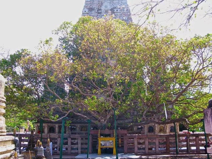 Mahabodhi Temple, Bihar   Best Places to Visit in India