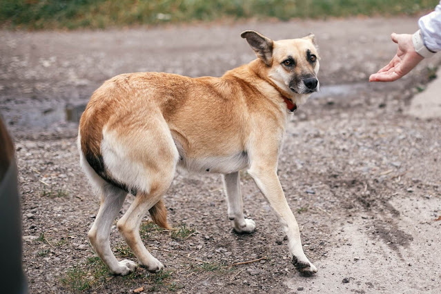 Why Is My Dog Scared of Me? What Can I Do About It?