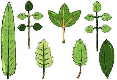 aplikasi identifikasi tanaman