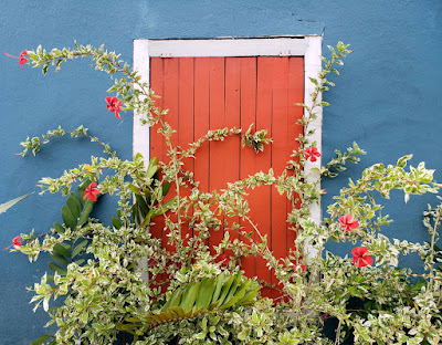 Dhuttered window with hibiscus bush and flowers