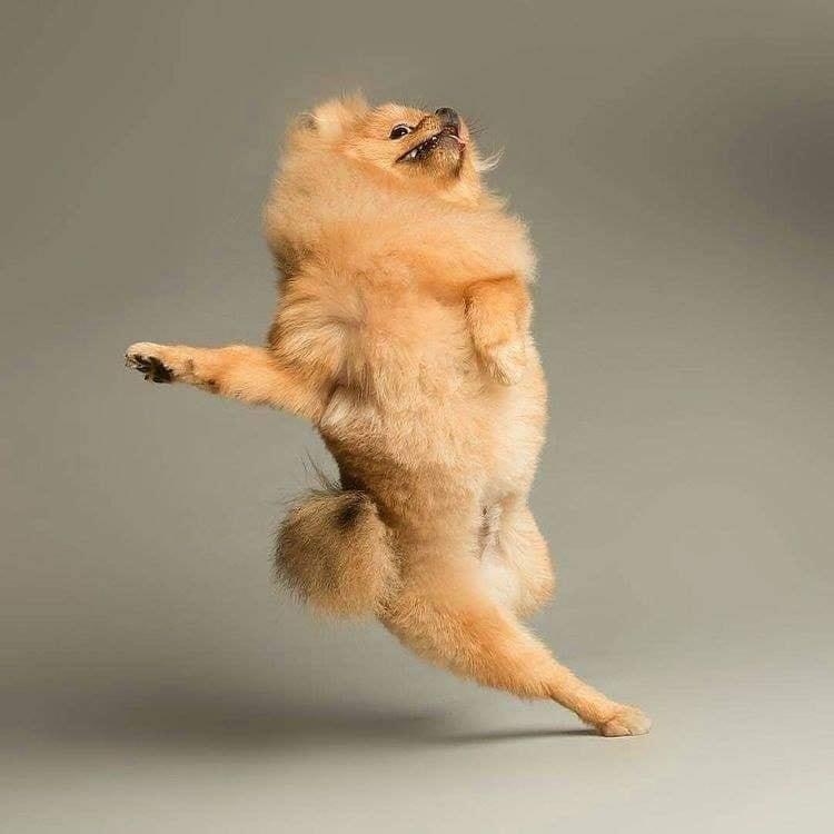Dancing dog expression