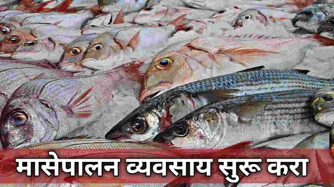 मत्स्यशेती कशी करावी | How to Start Fish Farming