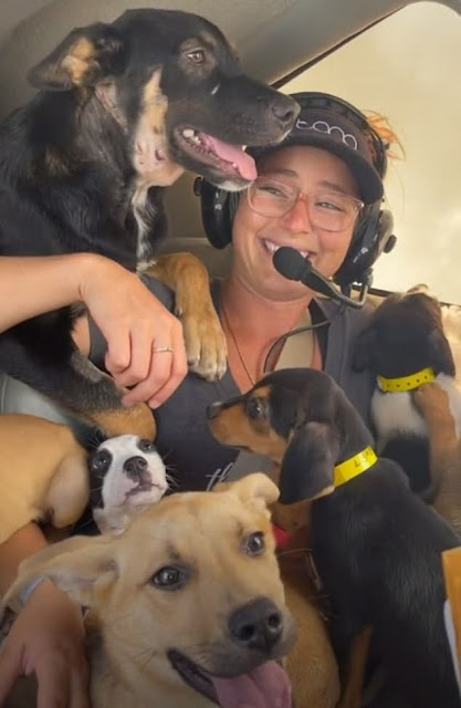 Puppies in plane