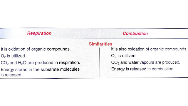 similarities between respiration and combustion