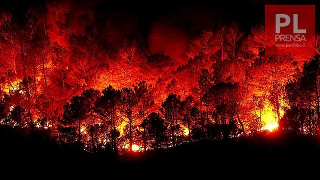 Arma secreta para combatir los incendios forestales ▶️ ARDD Podcast 998