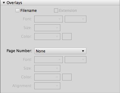 5th image of Adobe Bridge dashboard