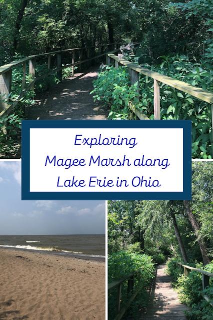 Exploring the World of Birds Along the Boardwalks of Magee Marsh in Oak Harbor, Ohio