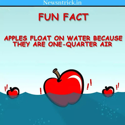 Fun facts about Apple