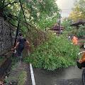 Masuki Musim Penghujan, Dinas LHK Laksanakan Pemotongan Pohon Rindang