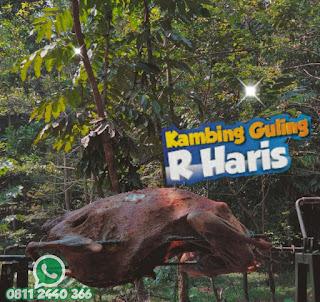 Kambing Guling Dago Bandung, kambing guling dago, kambing guling bandung, kambing guling,