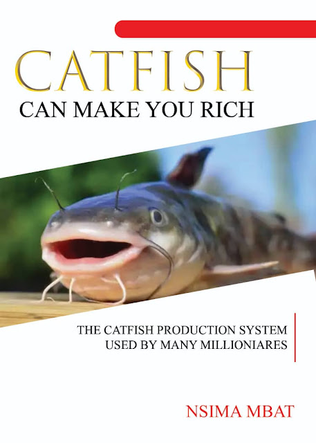 Catfish Can Make You Rich by Nsima Mbat