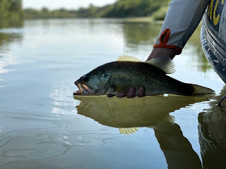 TFFF Bragging Board, Keira Quam, Fly Fishing Texas, Texas Fly Fishing, Fly Fishing for Largemouth Bass, Largemouth Bass, Bass on the Fly, Women Fly Fishers
