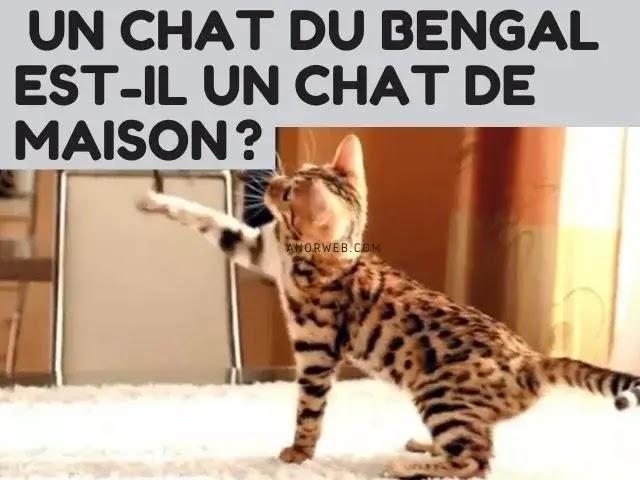 Un Chat Du Bengale Est-Il Un Chat De Maison?